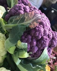 purple cauliflower